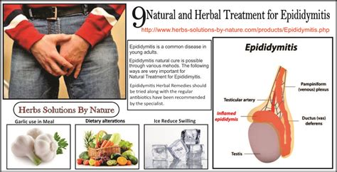 9 and herbal treatment for epididymitis herbs