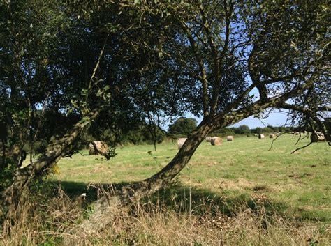 Grange Des Animaux ferme et animaux la grange des abers