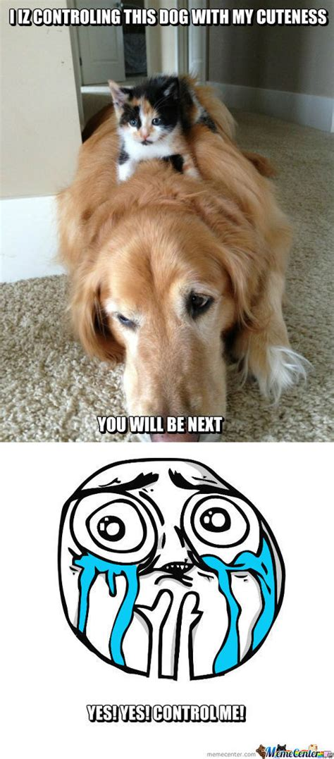 Cute Dog Memes - cute dog memes best collection of funny cute dog pictures