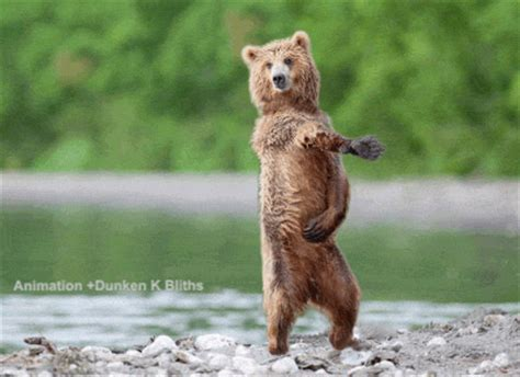 Dancing Bear Meme - bear gif find share on giphy