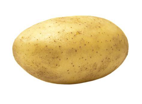 A Potato by Uses Potato As Contraceptive