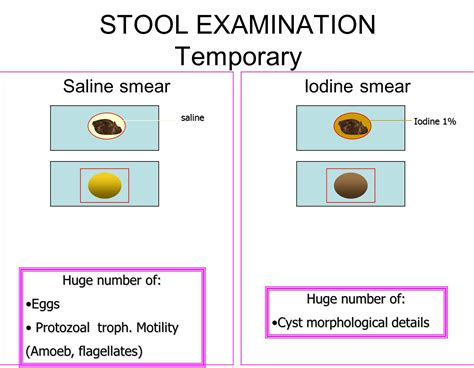 Methods Of Stool Examination by Duedu Lab