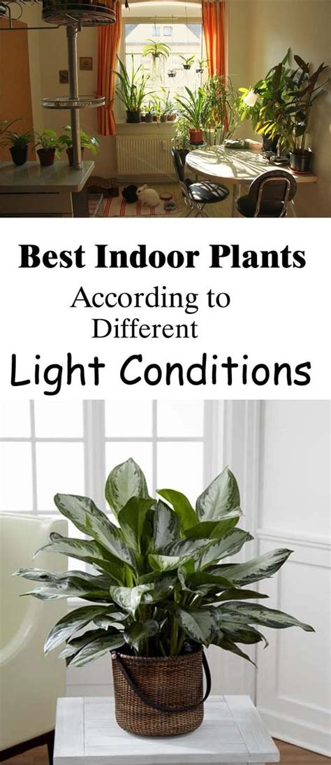 houseplants for low light conditions best indoor plants according to different light conditions