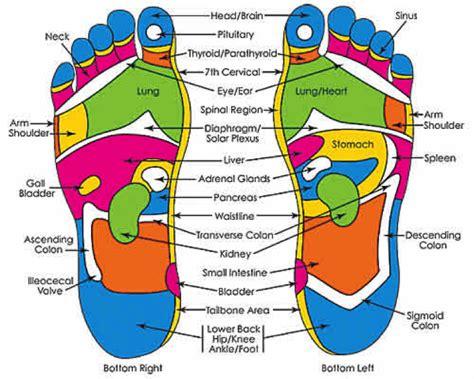 reflexology diagram of foot reflexology
