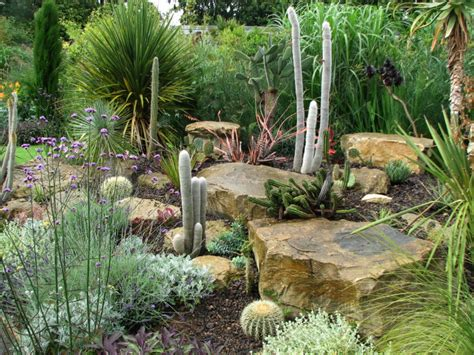 backyard cactus garden cactus front garden design ideas mayan backyard