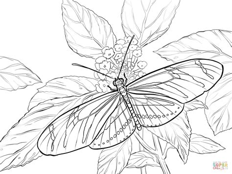 coloring book rar coloring pages butterfly coloring home