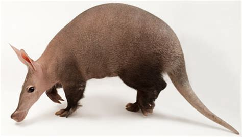 aardvark creation.com