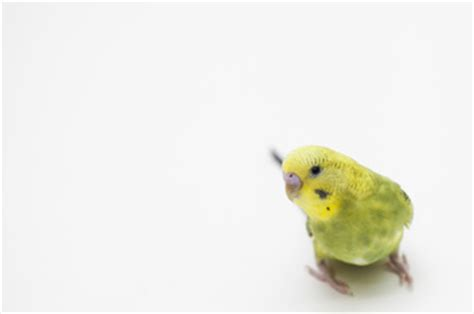 pet birds for sale visit us at petland dayton ohio