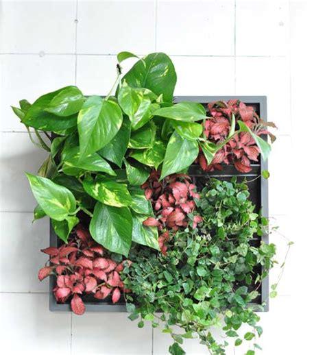 pflanzenwand selber machen pflanzenwand karoo grau im greenbop shop kaufen