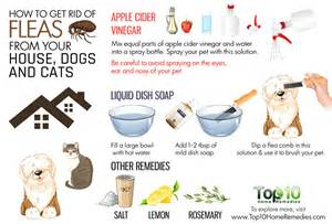 home remedies to get rid of fleas how to get rid of fleas from your house dogs and cats