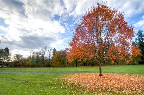 Trees That Shed Leaves by Why Do Trees Lose Their Leaves Encyclopedia Of Science