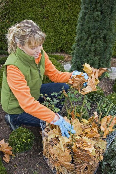 Herbstlaub Garten by Herbstlaub Entstehung Verwerten Kompostieren Entsorgen