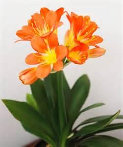 10 top flowering houseplants midwest living