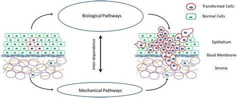 biological electrical resistor frontiers modeling the mechanics of cancer effect of changes in cellular and cellular