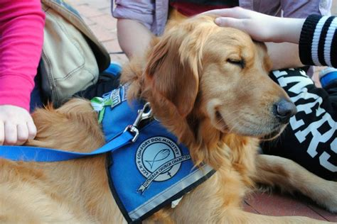 k9 comfort dogs 2565 best images about focus on mwd s k 9 s sar s on