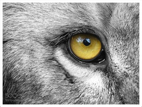 10 Amazing Portraits Of Animals by Eye Of The By Sinu Nair 500px