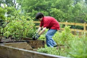 Backyard Planting Free Picture Boy Planting Vegetables Garden