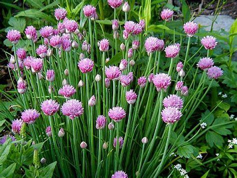 explore cornell home gardening vegetable growing