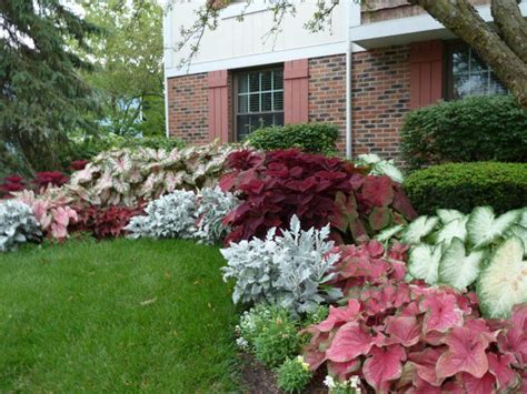 shade gardens zone 4 schattenpflanzen gartenideen kaladien schattige