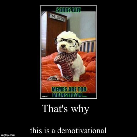 Intelligent Memes - intelligent dog imgflip