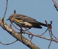 birding sites in fayetteville north carolina