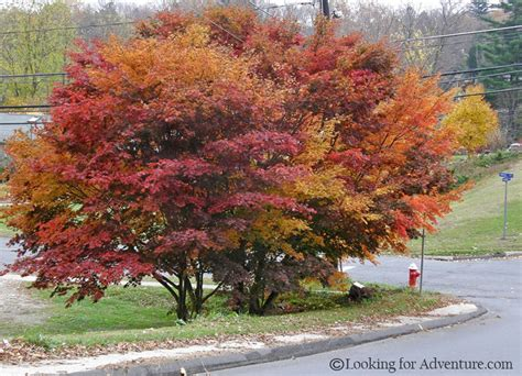 multi colored leaves on a tree in the fall