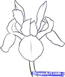 Iris Outline by How To Draw An Iris Step By Step Flowers Pop Culture Free Drawing Tutorial Added By