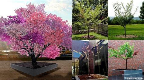 Pohon Cherry By One Home pohon ajaib yang diklaim bisa hasilkan 40 buah berbeda