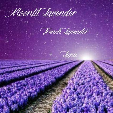 lavender new year goodies moonlit lavender scentsy recipe lavender