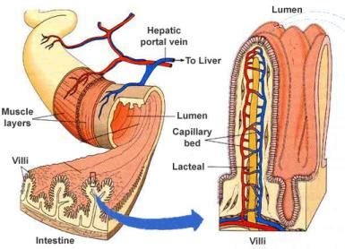 digestive system enzymes extract energy and nutrients from