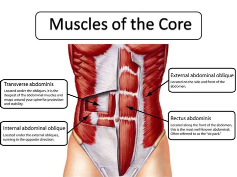 abdominals exercises peak loss and fitness