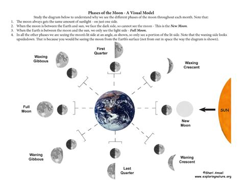phases of moon diagram phases of the moon a demonstrative inquiry