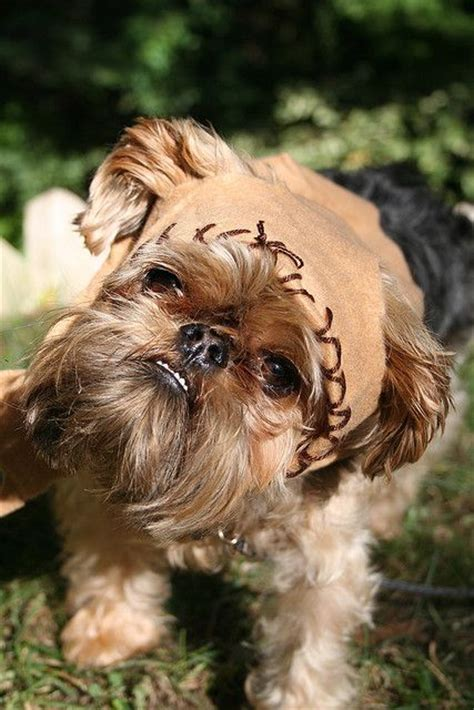 ewok puppy best 25 ewok costume ideas on ewok costume ideas