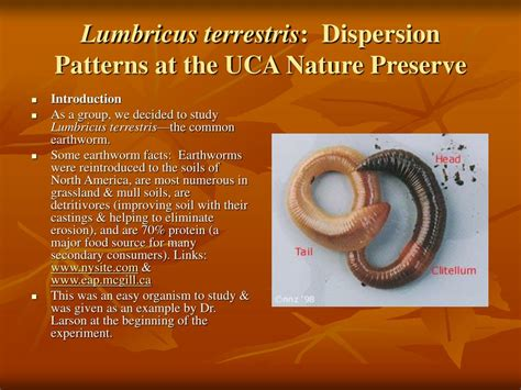 most common dispersion pattern in nature ppt lumbricus terrestris dispersion patterns at the