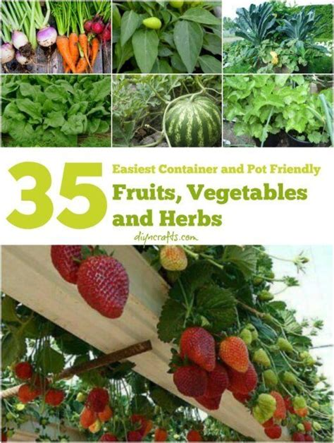 container gardening vegetables and herbs the 35 easiest container and pot friendly fruits