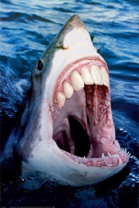 with teeth animals with human teeth