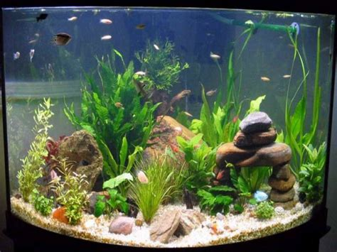 Tropical Aquarium Decorations by Home Accessories Fish Tank Decoration Pictureswith The