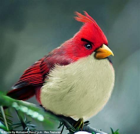 imagenes reales red wings los verdaderos angry birds schnauzi com