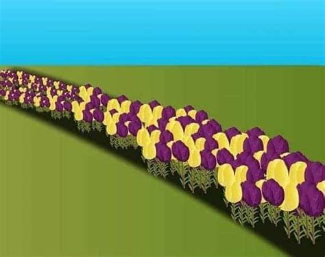 Pupuk Organik Untuk Bunga Matahari cara menanam bunga dahlia dari biji hingga berbunga