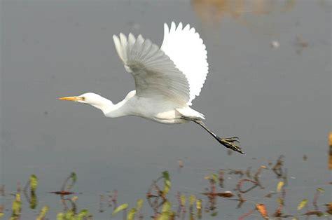 bird migration quotes quotesgram
