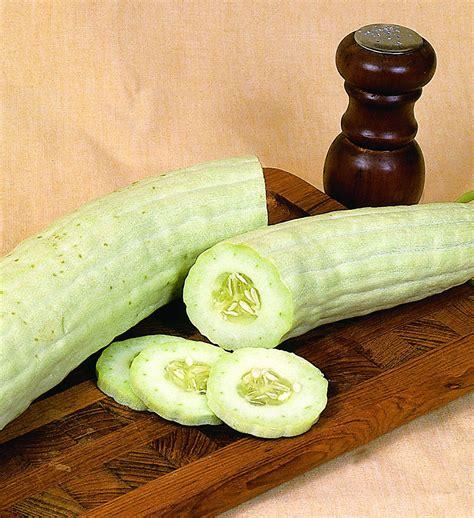 Organic Urban Gardening - armenian cucumber long high yield extra mild