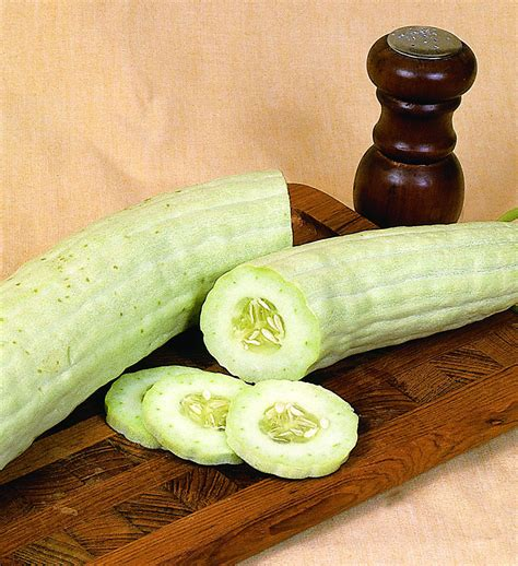 Armenian Cucumber: Long, High Yield, Extra Mild