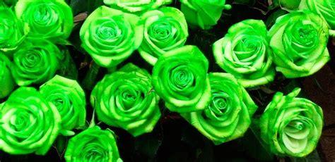 imagenes de ideas verdes rosas verdes