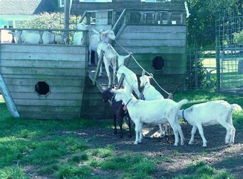 who sings whatever floats your boat 10 best images about goats on boats on pinterest boats