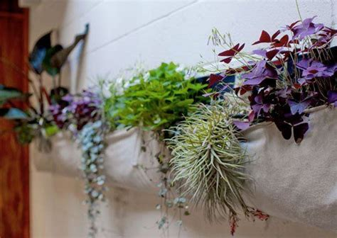 Apartment Therapy Air Plants 10 Ways To Display Air Plants