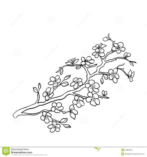 Cherry Blossom Branch Drawing Outline by Cherry Blossom Outline Www Imgkid The Image Kid Has It