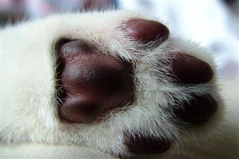 paw pads what cat breed went into my cat look at their paws