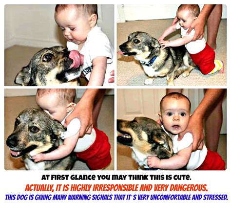 why do dogs each others ears language conscious companion
