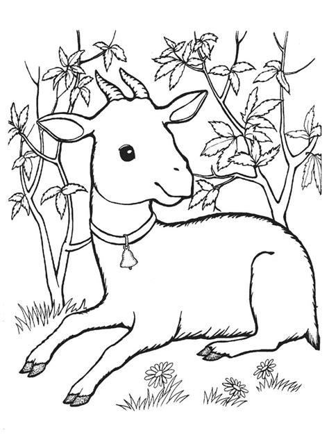 new year goat colouring in desenho de bode beb 234 sentado para colorir tudodesenhos