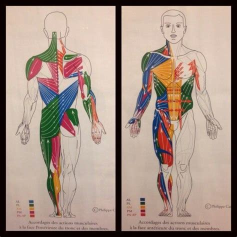 cadenas musculares thomas myers pdf 97 best images about salud on pinterest foot reflexology